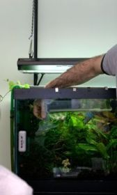Mike's Grow Out tank