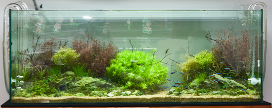 Overview of the tank